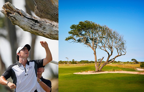 Ocean Course Third Hole Rory's Tree