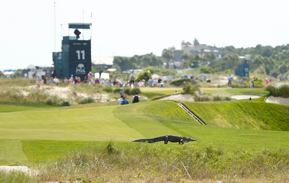 Alligator 103rd PGA Championship at Kiawah Island Resort's Ocean Course